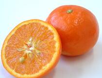 果実の知識【セミノール】<丸果...